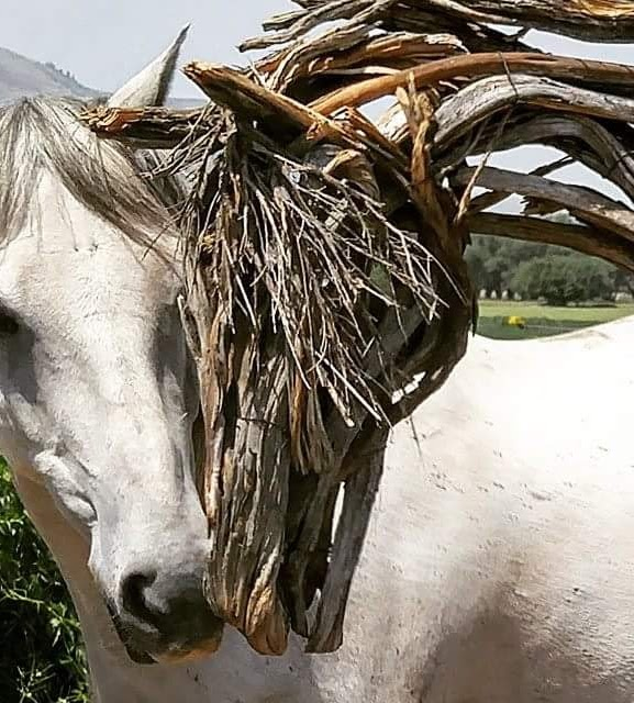 Photo of mixed media horse sculpture by Brenna Kimbro with real horse