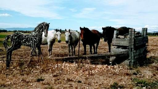 Photo of mixed media horse by Brenna Kimbro with real horses